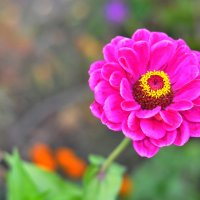 Цветок №1 :: Vladimir Beloglazov