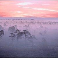 Летнее утро Югры. :: Алексей Хаустов