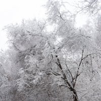 А у нас тут снег пошёл :: Павел Савин