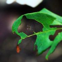 Чудо природы :: Elina Bagi