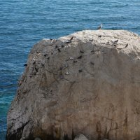 На пляже :: елена елена