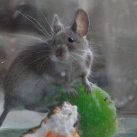 Мышь :: Баттал Омаров