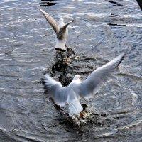 Птички 1. Взлет :: Андрей Николаевич Незнанов