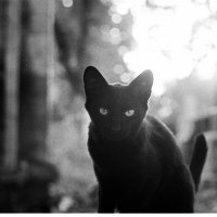 Black cat in cemetery :: Slater Calugaru