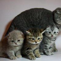 Кошка Сайли со своим потомством :: Евгений Спицын