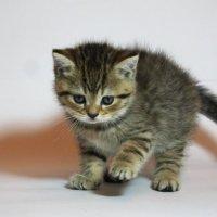 ... самый шустрый котенок :: Евгений Спицын