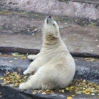 Белый медведь :: Дмитрий Сушкин
