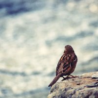 Очень одинокий воробей :: Лиля Ахвердян