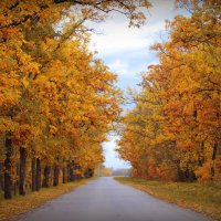 Осень.. :: Анастасия Лебедева