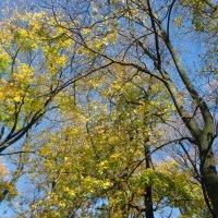 деревья :: Diana Кузьмина