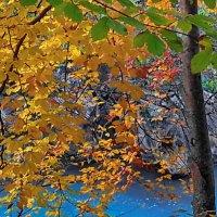 осенью у водопада в Яремче :: valeriy g_g