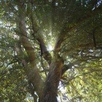 Сквозь листья :: Raman Stepanov