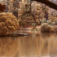 Осень :: Екатерина Капелла