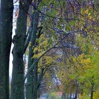 Краски осени :: Артем Калашников