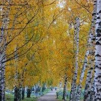 По дороге на работу :: Артем Калашников