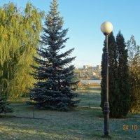 фрагмент парковой зоны :: Пётр Сухов