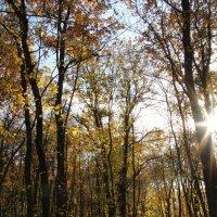 Осенняя прогулка по лесу :: Елизавета Ваганова