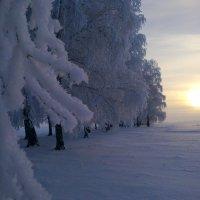 зимушка зима :: Анастасия Филиппова
