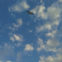 чайка в небе :: Anastacia Ivanova