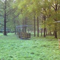 нижний парк :: Pasha Grigiriev