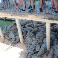 Камбоджа. Вкусные и голодные :: Владимир Шибинский