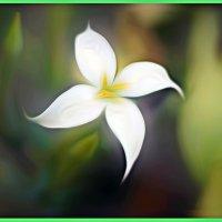 Цветочек Аленький :: Shmual Hava Retro