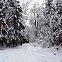 Зимний подмосковный лес :: Борис Русаков