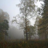 Туманное утро. :: Владимир Михайлович Дадочкин