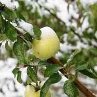 первый снег :: alex kahovskiy