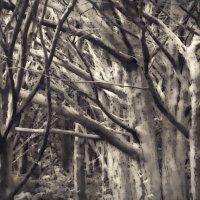 Таинственный лес... :: Sofia Rakitskaia