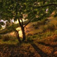 Червоноградское болотце... :: АндрЭо ПапандрЭо
