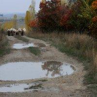 Осень в степном Крыму :: Игорь Юрьев