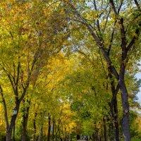 Осенний парк :: Николай Мелонов