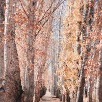 Осень :: Настя Радаева