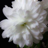 Цветок :: Anton Kozyrev