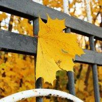 Осень :: Наталья Абрамова