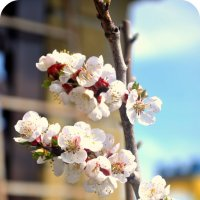 Цветущая весна.. :: Татьяна Александровна