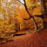 Осенний лес в урочище Джурла :: Алексей Вуколов