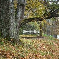 Осень в Пушкинских горах (этюд 1) :: Константин Жирнов