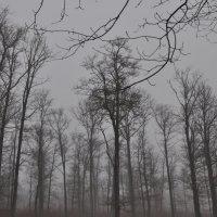Туман :: Светлана
