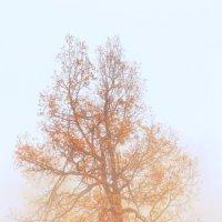А листья пожелтели :: Виктор Максон