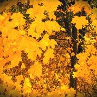 Золотая осень :: Алеся Денежкина