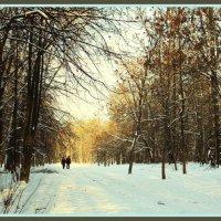 В зимнем лесу... :: Nonna