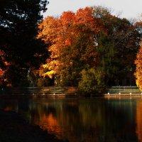 Осенний парк :: Надежда Кашицина