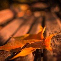 autumn leaf :: freetimephoto free