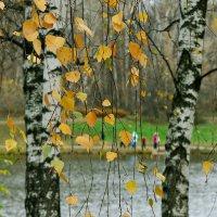 Березовый веник :: Ирина Татьяничева
