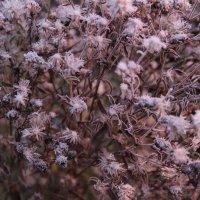 осенние цветы :: Sergey Ganja