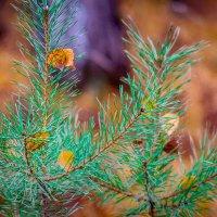 Краски осени... :: игорь козельцев