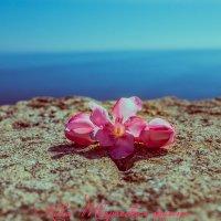 Сицилия :: Творческая группа КИВИ
