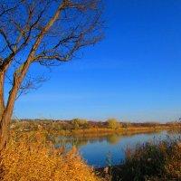 осень в реке :: Marina Timoveewa